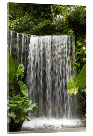 Akrylbillede  Waterfall in the orchid garden - Cindy Miller Hopkins