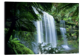 Akrylbillede  Russell Falls and tree ferns - Kevin Schafer