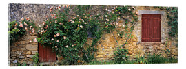 Akrylbillede  Climbing roses on old stone wall - Ric Ergenbright