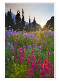 Premium-plakat  Flower meadow at sunrise - Gary Luhm