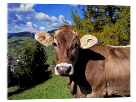 Akrylbillede  Cow in the Dolomites - Ric Ergenbright