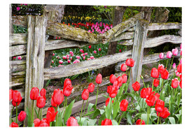 Akrylbillede  Tulips in front of a wooden fence - Jamie & Judy Wild