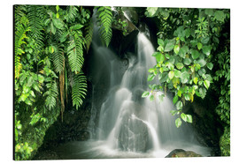 Print på aluminium  Small waterfall in the rainforest - Kevin Schafer