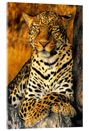 Akrylbillede  Enthroned Leopard - Dave Welling