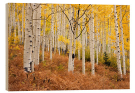 Print på træ  Aspen forest and ferns in autumn - Don Grall