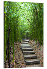 Print på aluminium  Wooden path in the bamboo forest - Jim Goldstein