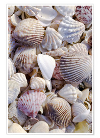 Premium-plakat  Shells on the beach - Rob Tilley