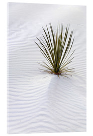 Akrylbillede  Yucca on sand dune - Don Grall
