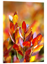 Akrylbillede  Red bilberry leaves - Ric Ergenbright