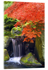 Akrylbillede  Waterfall and Japanese Maple - Don Paulson