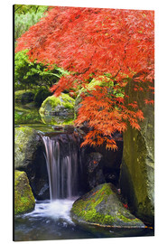 Print på aluminium  Waterfall and Japanese Maple - Don Paulson