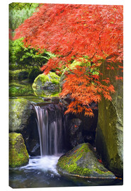 Lærredsbillede  Waterfall and Japanese Maple - Don Paulson