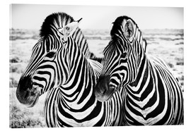 Akrylbillede  Two Zebras - Jan Schuler