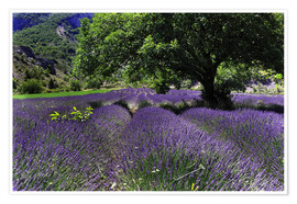 Premium-plakat Lavender field with tree