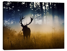 Lærredsbillede  Red deer in the subtle light - Alex Saberi