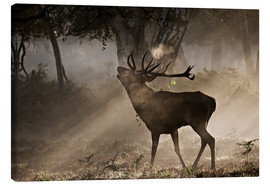 Lærredsbillede  Roaring deer in the morning - Alex Saberi