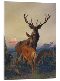 Akrylbillede  A Stag with Deer at Sunset - Charles Jones