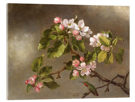 Akrylbillede  Apple Blossoms and a Hummingbird - Martin Johnson Heade