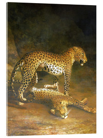 Akrylbillede  Two Leopards lying in the Exeter Exchange - Jacques Laurent Agasse