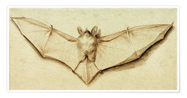 Premium-plakat  Bat with spread wings - Hans Holbein d.J.