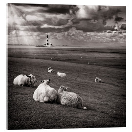 Akrylbillede  Talking Sheep - Carsten Meyerdierks