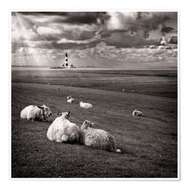 Premium-plakat  Talking Sheep - Carsten Meyerdierks