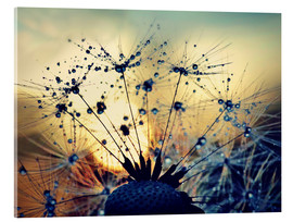 Akrylbillede  Dandelion in the sunset - Julia Delgado