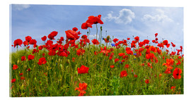 Akrylbillede  Poppies Panoramic - Melanie Viola