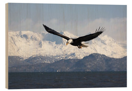 Print på træ  Bald eagle in flight - David Northcott