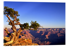 Akrylbillede  Grand Canyon in Arizona - Paul Thompson