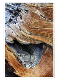 Premium-plakat  Trunk of an old pine - Dennis Flaherty