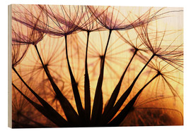 Print på træ  Dandelion in the sunset II - Julia Delgado