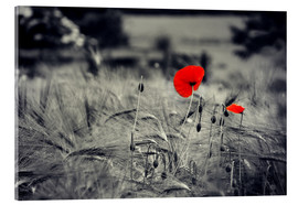 Akrylbillede  Red poppies in a cornfield - Julia Delgado