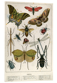 Akrylbillede  Insects - English School