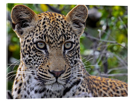 Akrylbillede  The leopard - Africa wildlife - wiw