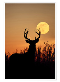 Premium-plakat  Whitetail Deer with full moon - Larry Ditto