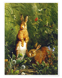 Premium-plakat  Rabbits in a meadow - Olaf August Hermansen