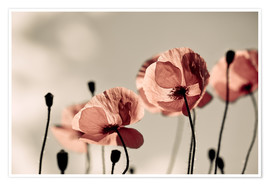 Premium-plakat Poppy Meadow