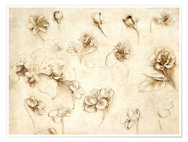 Premium-plakat  Study of Flowers of Grass-like plants - Leonardo da Vinci