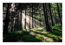 Premium-plakat Light rays in the forest