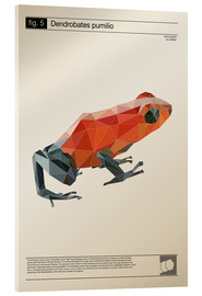 Akrylbillede  fig5 Polygonfrosch Poster - Labelizer