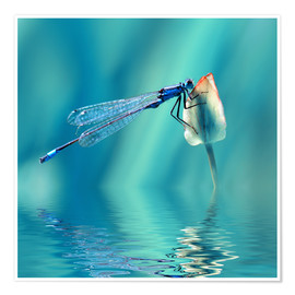 Premium-plakat  Dragonfly with Reflection - Atteloi
