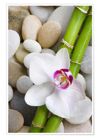 Premium-plakat  Bamboo and orchid - Andrea Haase Foto