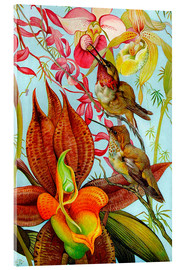 Akrylbillede  Exotic birds on orchids