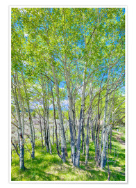 Premium-plakat Birches