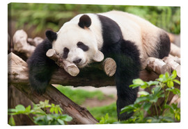 Lærredsbillede  Giant panda sleeping - Jan Christopher Becke
