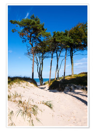 Premium-plakat Baltic sea - Wstern beach close to Ahrenshoop