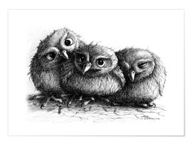 Premium-plakat Three young owls - owlets