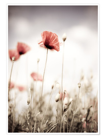 Premium-plakat Red Poppy Flowers