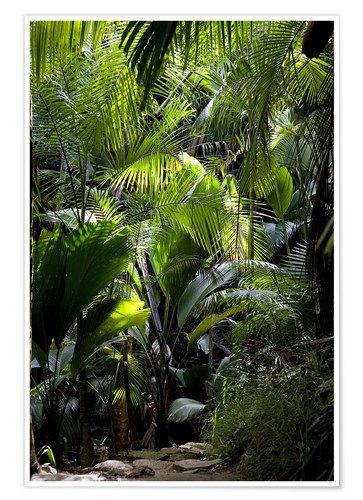 Premium-plakat Jungle path